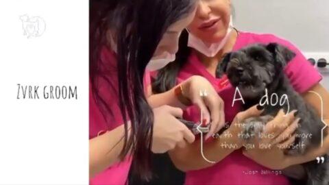 Sečenje noktića kod pasa